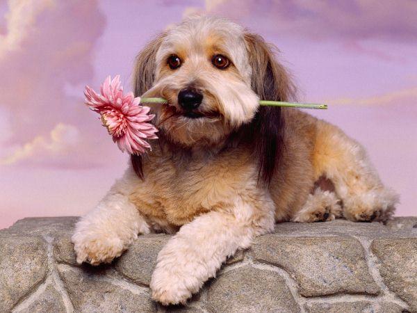 Карманный друг: названия маленьких пород собак