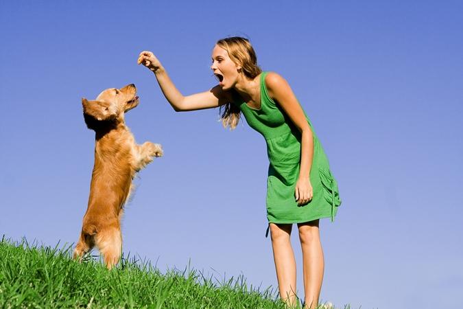 Как отучить собаку кусаться: советы кинологов