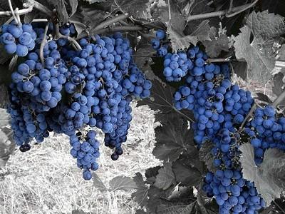 Как приготовить вино  имя в  домашних условиях