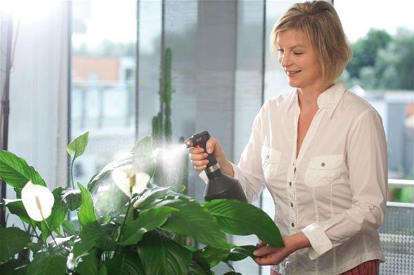 Эпин – диковинный омнапон ради комнатных растений