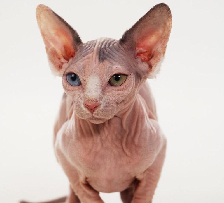Маленькие кошки – питомец про компактного жилища