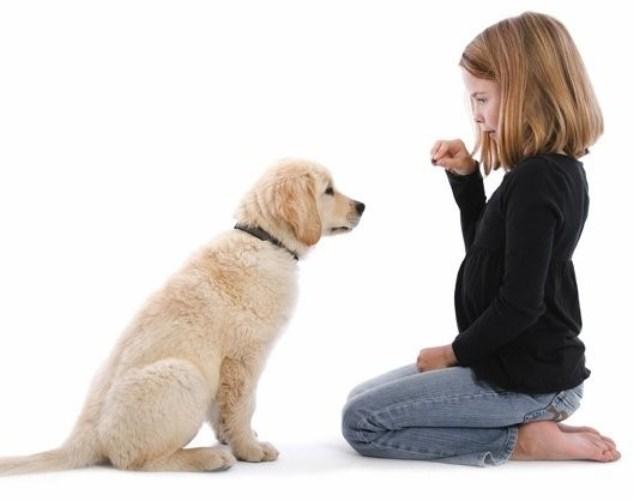 Как отучить собаку писать дома: советы
