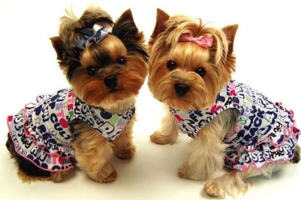 Как сшить одежду ради собаки