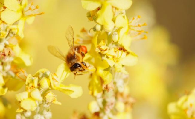 Донниковый мед: путь на автовес золота